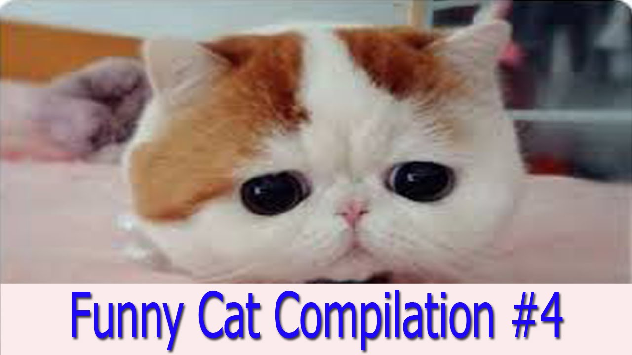 FunnyCat Super Funny Cats videos ■Funny Cats pilation 2015