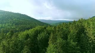[홈페이지]  숲(aerial)