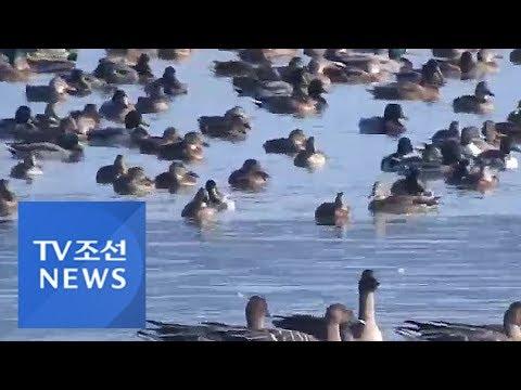 부산시, 천연기념물 낙동강하류 철새도래지 기록영상 제작