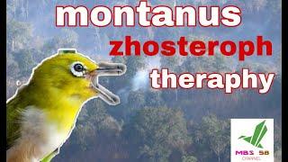 Download Lagu Terapi montanus betina || terbukti mp3