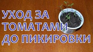 Уход за рассадой ТОМАТОВ от ВСХОДОВ до ПИКИРОВКИ(Недавно, 3 дня назад, мы посеяли на рассаду сладкий перец и томаты ДЕ-БАРАО. Сейчас томаты уже дали всходы,..., 2015-03-19T03:12:39.000Z)