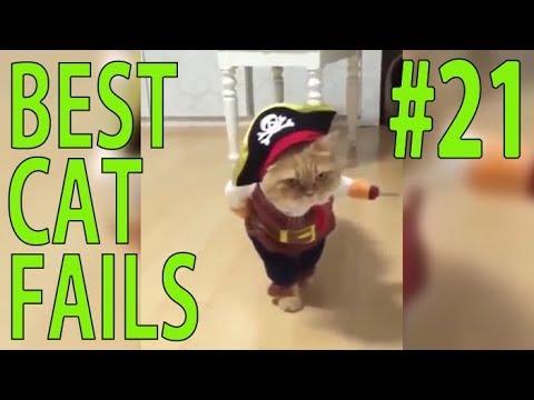 Best Cat Fails: #21 | FAIL.GROUP