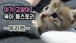 아기 고양이 육아 몰아보기 '뚜리편'