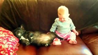 French Bulldog snoring