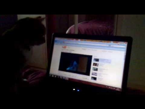 Chat Réel Recherche Chat Virtuel