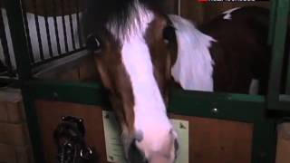 """Национальный конный парк """"Русь"""""""