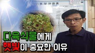 다육식물에게 햇빛이 왜 중요할까?? 햇빛의 역할~ 자외…