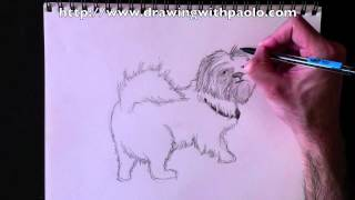 Drawing A Shih-tzu With Paolo Morrone