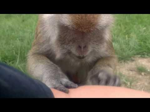 Monkey love tap massage