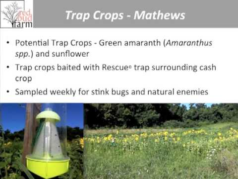 Brown Marmorated Stink Bugs Webinar