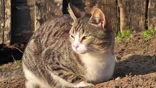 Деревенские коты:)Любителям кошек;)