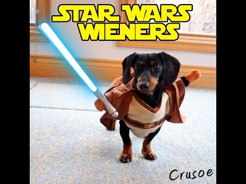 Crusoe the Dachshund Fights Against The Evil