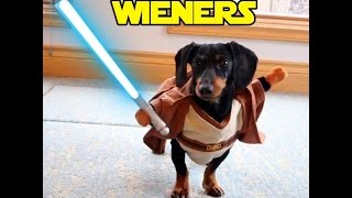 Star Wars Wieners - Crusoe the Dachshund Plays Star Wars