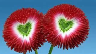 Magic Flowers | Beautiful But Strange Flowers