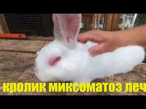 кролик миксоматоз лечение