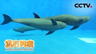 《远方的家》 20191023 长江行(54)  秀美巴陵 生态岳阳| CCTV中文国际
