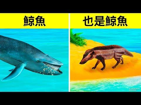 為什麼鯨魚成為有史以來最大的動物