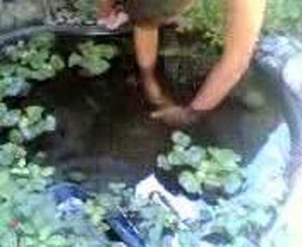 Nico cattura un pesce nel laghetto in giardino youtube for Quali pesci mettere nel laghetto