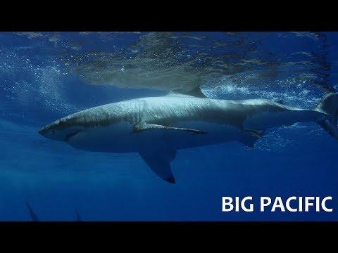 Великий Тихий океан. 3, 4 и 5 серии (Прожорливый / Страстный / Закулисье)