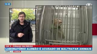 Laboratório alemão é acusado de maltratar animais
