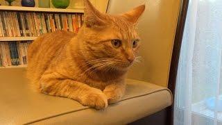 ひろしの表情からして、椅子の下で何が 起こっているかわかっていないみ...