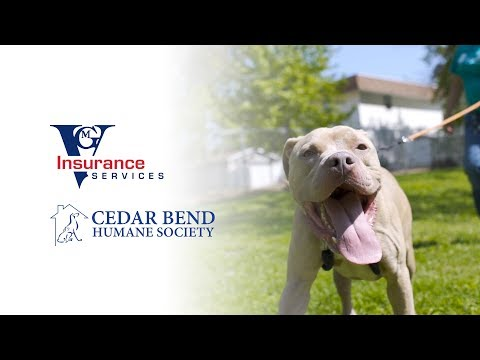 VGM Insurance Services and Cedar Bend Humane Society - Recreational Play Area Project 2019 thumbnail