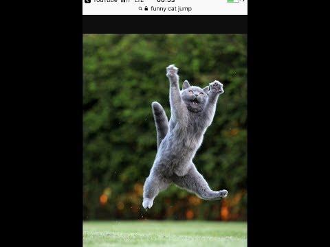 Cat fail jump