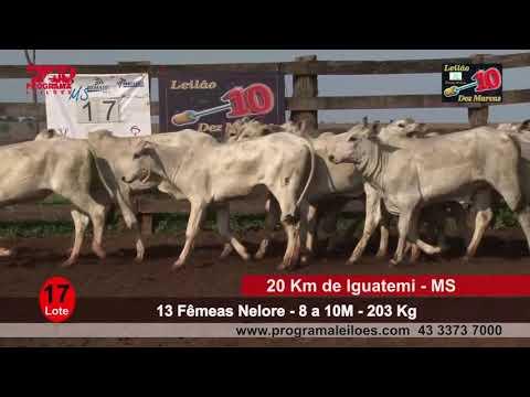 Lote 17   13 Fêmeas   8 a 10M   203 Kg   20 Km de Iguatemi   MS