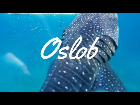 SWIMMING WITH GIANTS! | Oslob Whale Sharks + Tumalog Falls