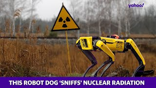 This robot dog 'sniffs' nuclear radiation