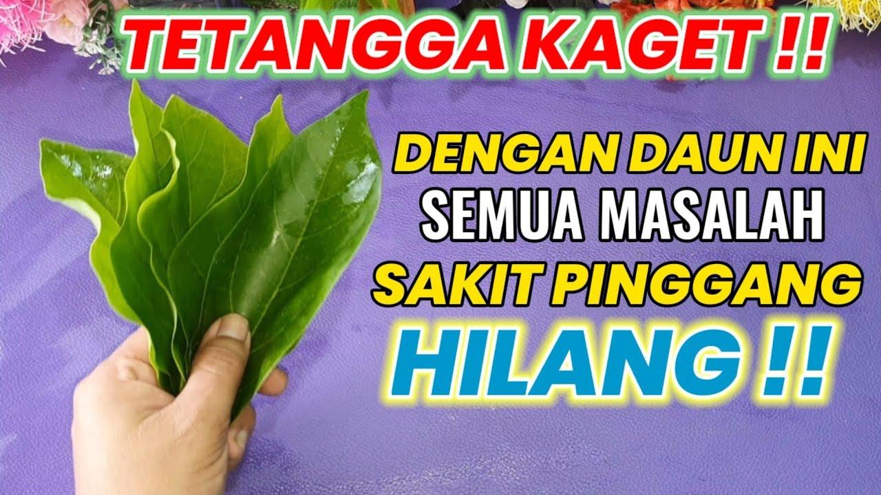 Download SAKIT PINGGANG,KOLESTEROL & SYARAF KEJEPIT SEMBUH DENGAN DAUN INI