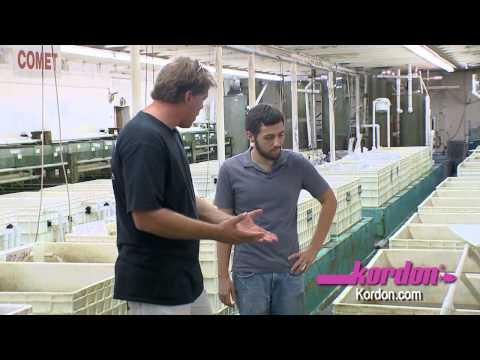 BZTV by HIKARI at Segrest Farms in Florida - Koi freshwater