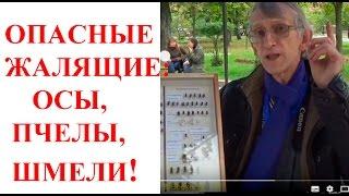 Опасные Жалящие Насекомые: Пчелы, Осы, Шмели. Научные Пикники в Киеве, Украина