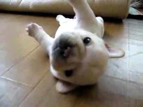 Video Chú chó ngộ nghĩnh -Funny dog