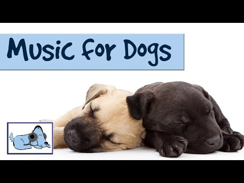music-for-dogs---special-music-to-help-dogs-relax.-used-by-thousands!-try-it-today.