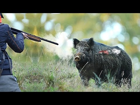 REAL Hunting For Wild Boar! REAL MOMENTS WILD BOAR HUNTING! NEW SEASON 2017