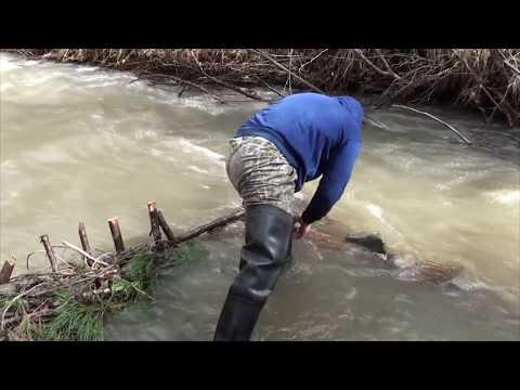 ловля вершами на реке
