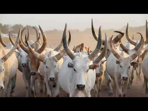 ACHUEI DENG AJIING - LOVE S New South Sudan Music 2017