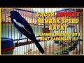 Suara Kacer Konslet Nembak Speed Rapat Bongkar Materi Cocok Buat Pancingan Pagi Hari  Mp3 - Mp4 Download