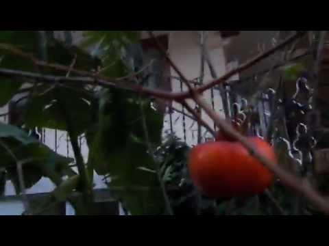 Доставка фруктов в офис и на дом в Санкт-Петербурге.