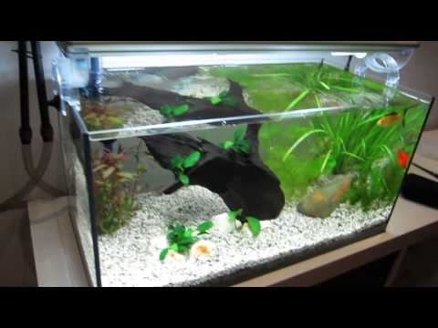 Allestimento acquario per guppy doovi for Acquario per pesci