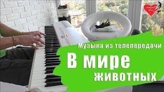 Работы учеников - А. Меркурьев - В Мире Животных (П. Мориа Жаворонок) - Уроки фортепиано