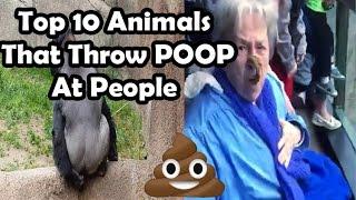 Top 10 animals throwing poop at people (MONKEY THROWS POOP AT GRANDMA) poo throwing monkeys