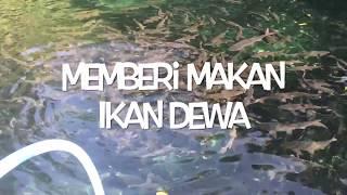 Video Memberi Makan Ikan Dewa di Linggarjati download MP3, 3GP, MP4, WEBM, AVI, FLV Agustus 2018