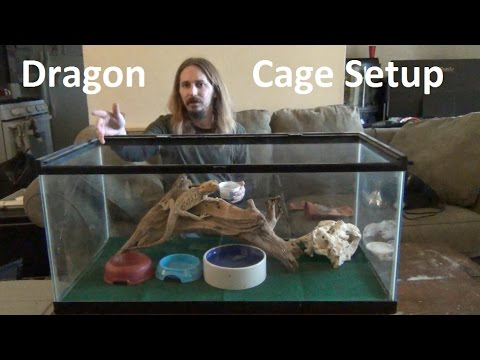 Bearded Dragon Cage Setup Tutorial