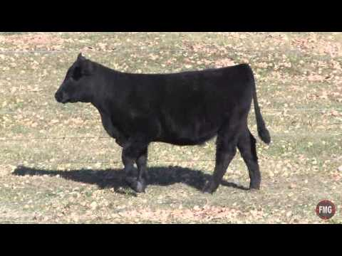Polzin Cattle 2014 Ceda Broker