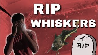 We Lost a Redtail Catfish... *RIP WHISKERS*