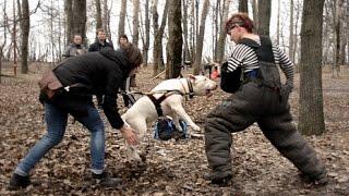 Бультерьер Дон на защите - 9 апреля Нижний Новгород