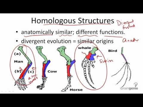 homologous structure by miguel garcia
