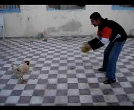 Libyan+Paki Chicken